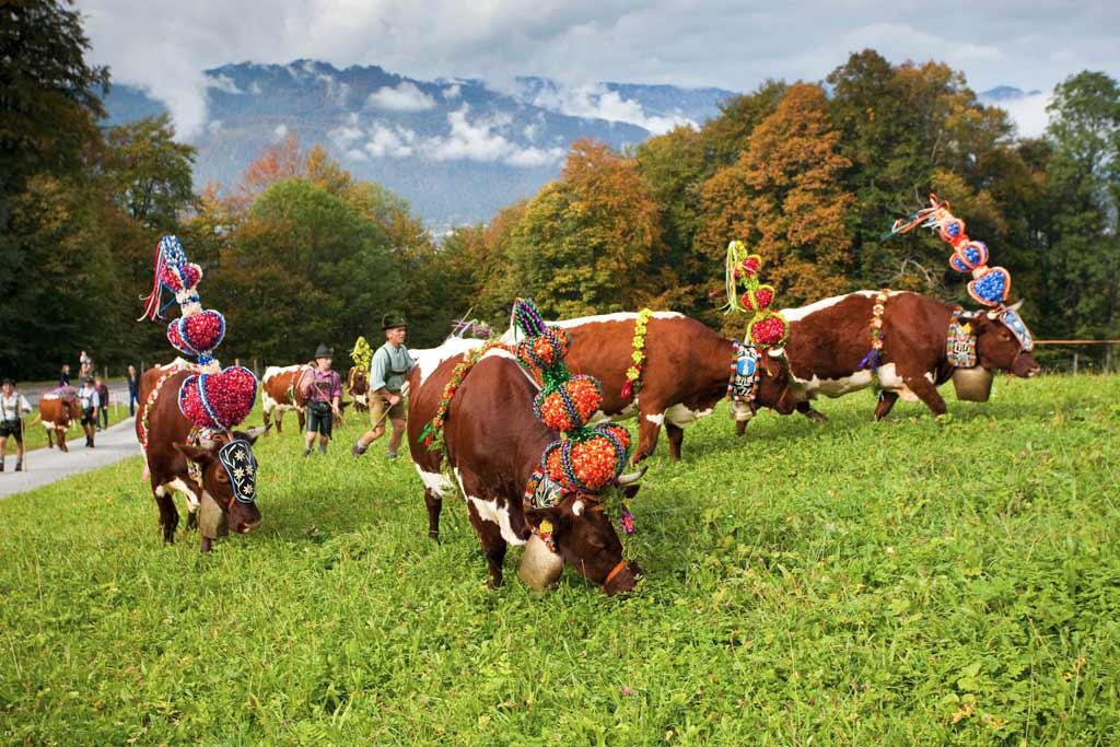 Almabtrieb-Berchtesgaden